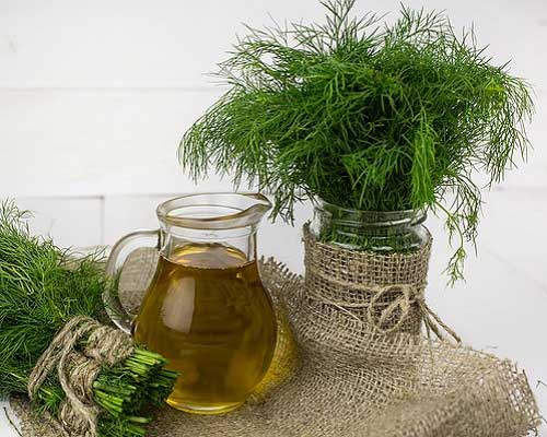 What is Dill Oil