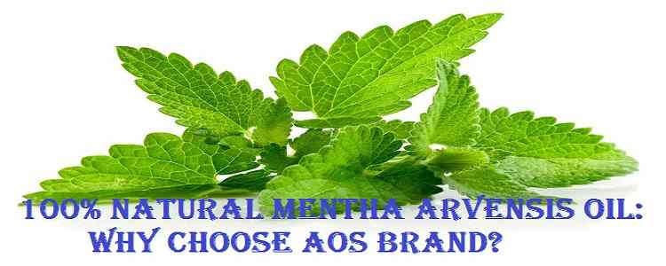 All About Mentha Arvensis Oil