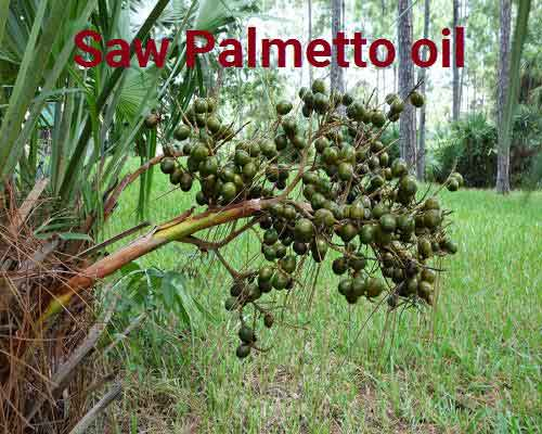 Does Saw Palmetto Oil work on Hair Loss is Myth or Miracle