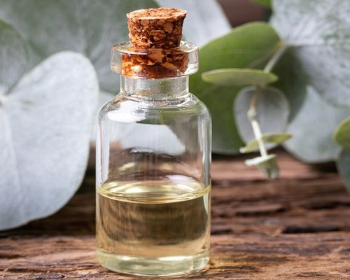 What are the benefits of Eucalyptus Oil