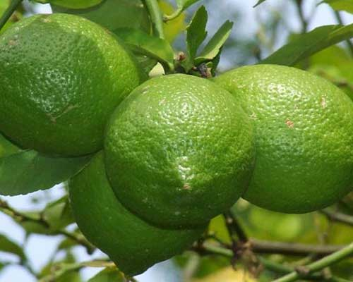 How to Use Lime Oil