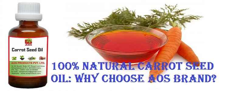 Carrot Seed Oil Where to Buy