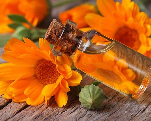 About Calendula Oil