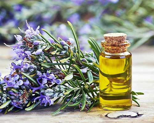 What is Rosemary Oil
