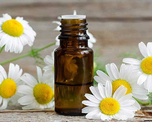 How to Use Chamomile Roman Oil
