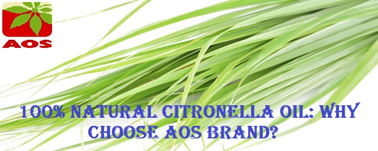 Citronella Oil Where to Buy