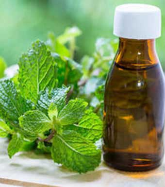 MENTHOL AND MINT OILS