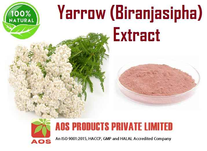 Yarrow Extract